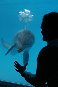 071218-dolphin-diver-02