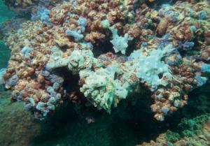 Колоритни водни гъби, обрастнали върху скално дъно