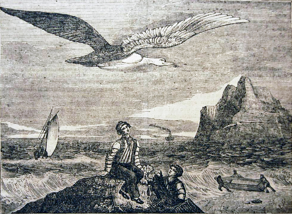 albatroz_-_panorama_1837