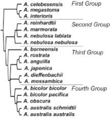 Филогенетични отношения,основани на поделянето по морфологични белези.