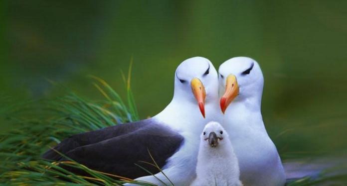 plica-albatros-1-696x374