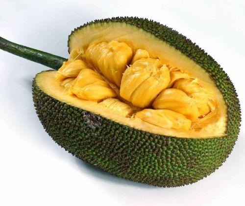 Плод на Хлебно дърво