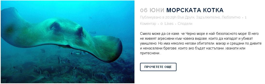 morska-kotka-32