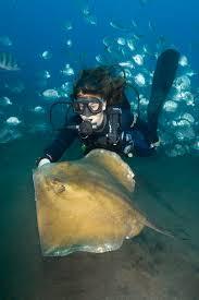 morska-kotka (4)